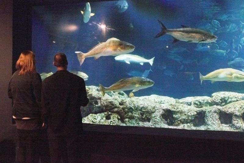 Guests break from the festivities to take in oceanic exhibits.