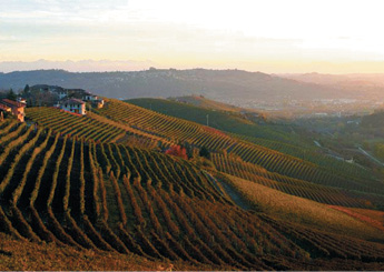 "Best in Glass:  ""I once visited Giuseppe Rinaldi's vineyard in Italy and had some of the most mind-bending wine ever."""