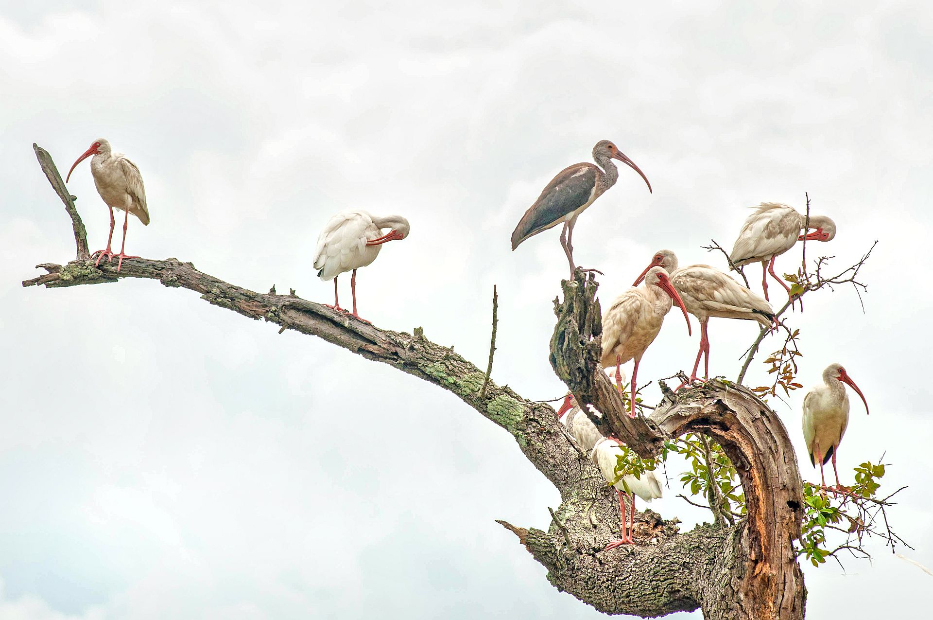 """HONORABLE MENTION Professional category: Ibis Gathering by Donnie Smith; """"Magnolia Cemetery has a very diverse bird population. It's a popular spot for Charleston birders."""""""