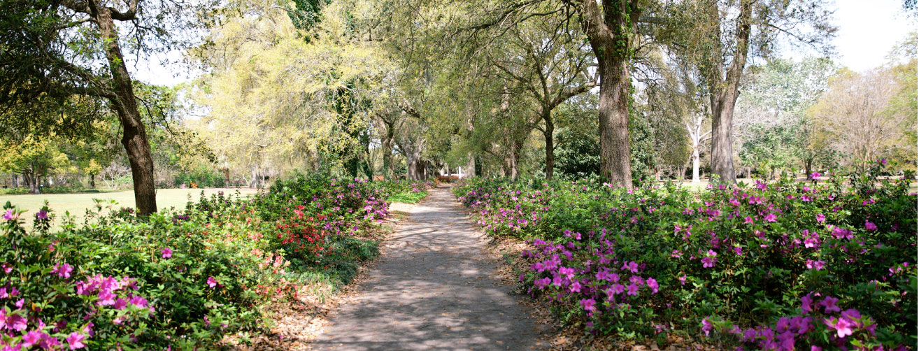 """Potent Pathways: Designed in 1906 by Olmsted's son John Charles, Hampton Park is one of the Messners' favorite Lowcountry spots. """"It just draws you in; the paths invite you to meander and explore, and that's really the essence of a classic Olmsted design,"""" says Jenny."""