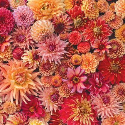 A floretflower Instagram photo