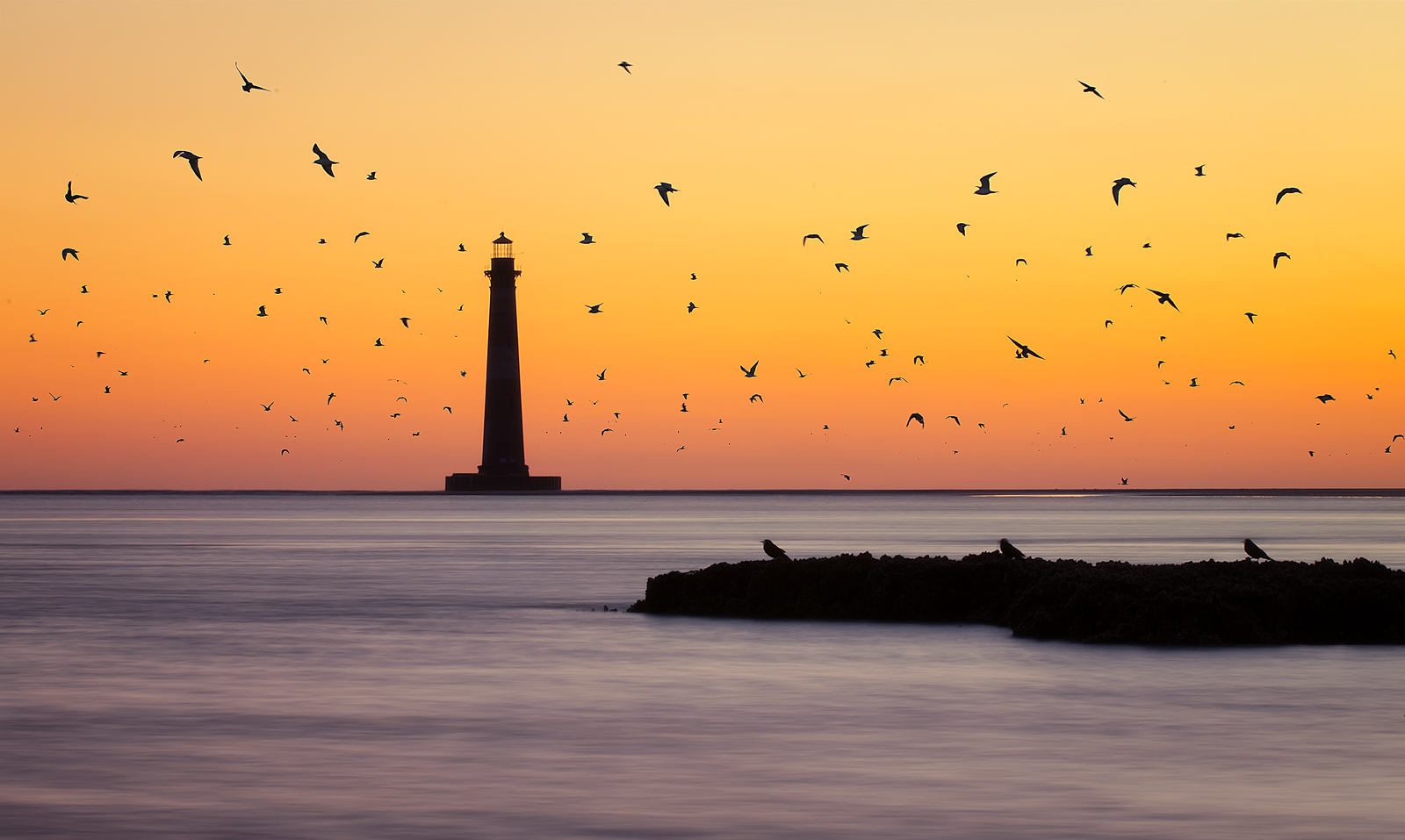 """FINALIST Professional category: Swarm by Taylor Franta; """"The birds come to life as the sun begins to warm the sky near the Morris Island Lighthouse on 3/3/16.  During low tide a sandbar forms out by the lighthouse and the birds seem to enjoy resting their wings on this sandbar. As the tide comes in, however, they are forced to somewhere else to rest."""""""