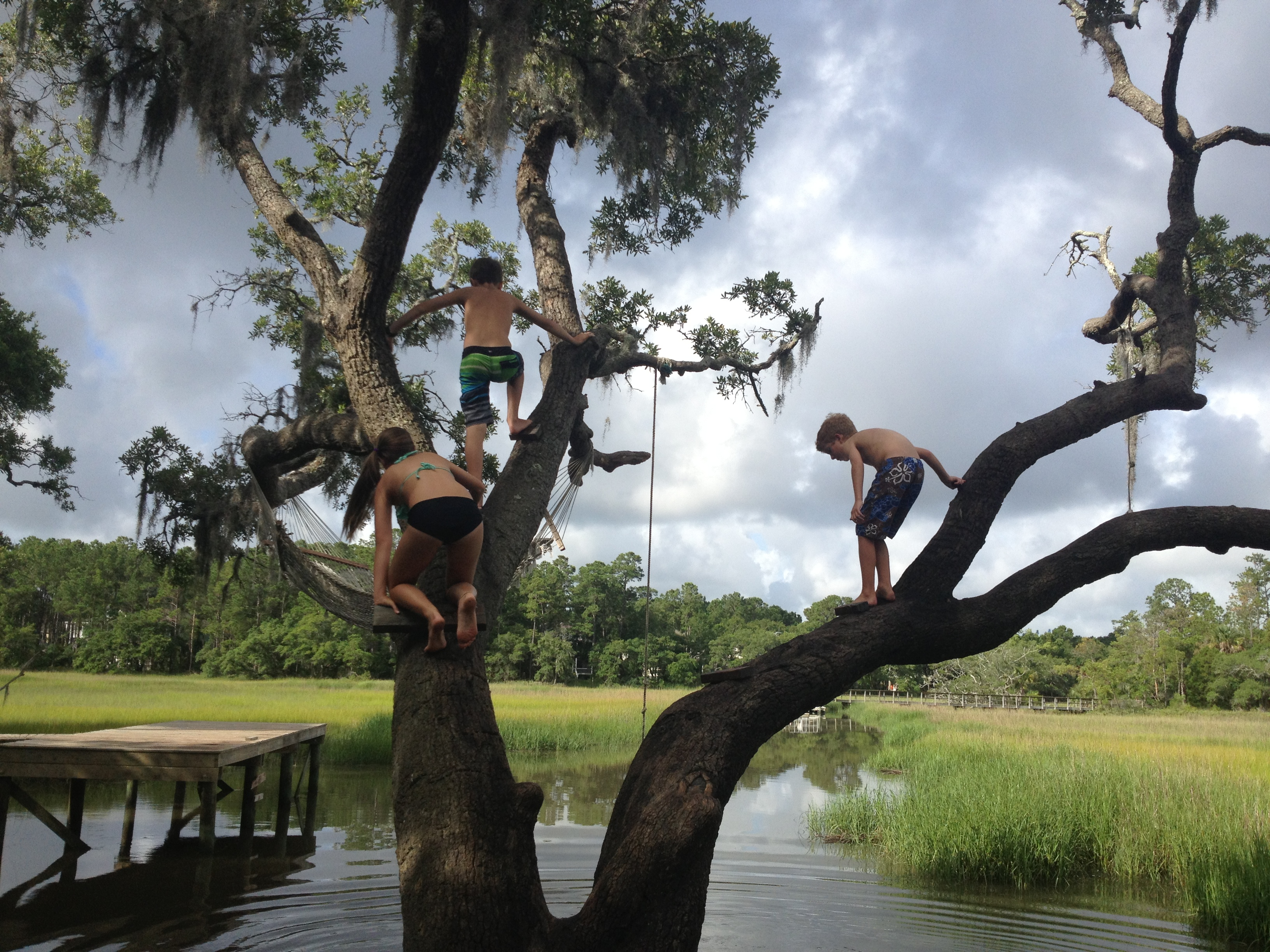 """FINALIST Amateur category: The Giving Tree by Julia Shealy; """"This old tree provided much adventure and fun for kids in my neighborhood.  They build rope swings, hammocks, and used it as a diving board to plunge into the creek below."""""""