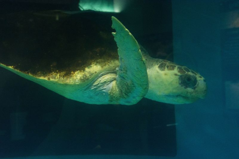 The sea turtle exhibit was a favorite among guests.