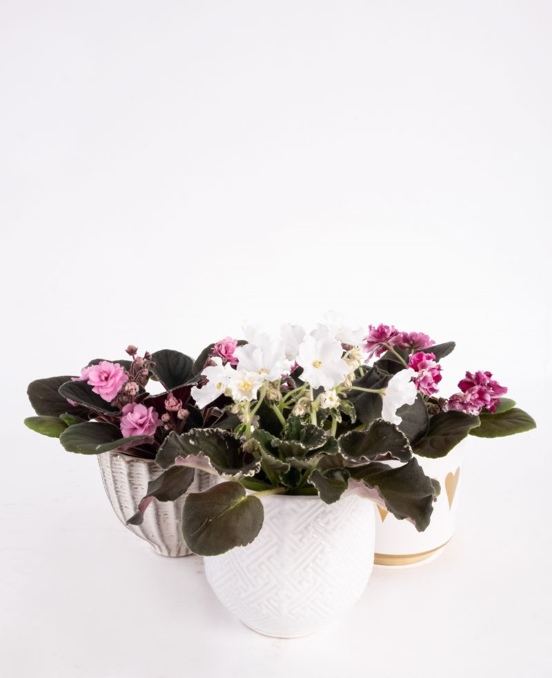 Assorted African Violet ceramic containers, $16-$21 at Abide-A-While